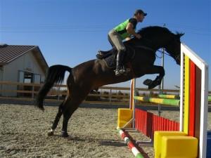 Galeria Foto a Clubului Equestria