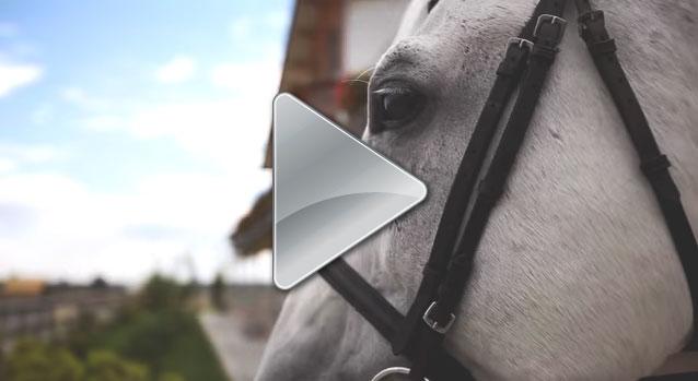 Prezentare equestria
