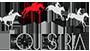 Clubul de Echitatie Equestria